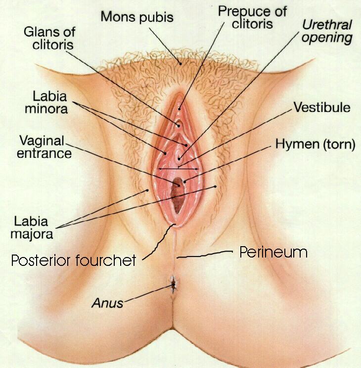 seksuelle fantasier hvordan stimulere klitoris