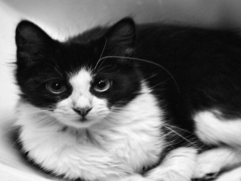 d970939d BK: Svart og hvit katt - Bildekritikk - Diskusjon.no